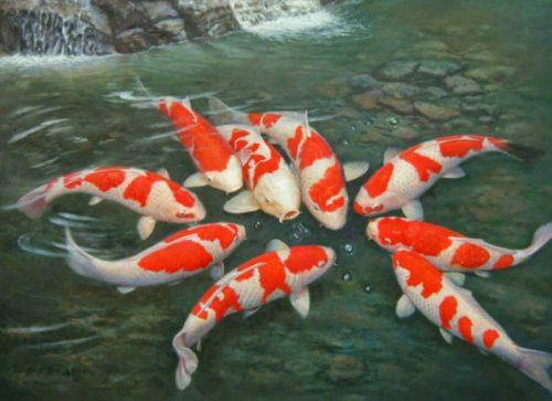 Nằm mơ thấy cá báo hiệu điều gì, đánh con gì chắc ăn nhất?