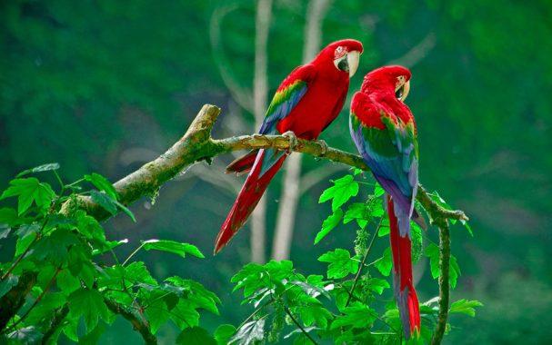 Nằm mơ thấy chim là điềm báo gì, đánh đề con gì chắc ăn nhất?