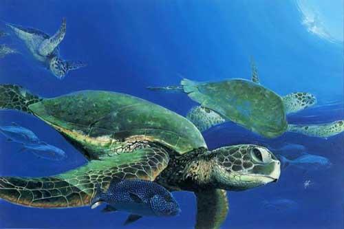 Nằm mơ thấy rùa báo hiệu điều gì, đánh con gì chắc ăn nhất?