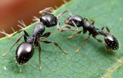Nằm mơ thấy đàn kiến, con kiến đánh đề con gì chắc ăn nhất?