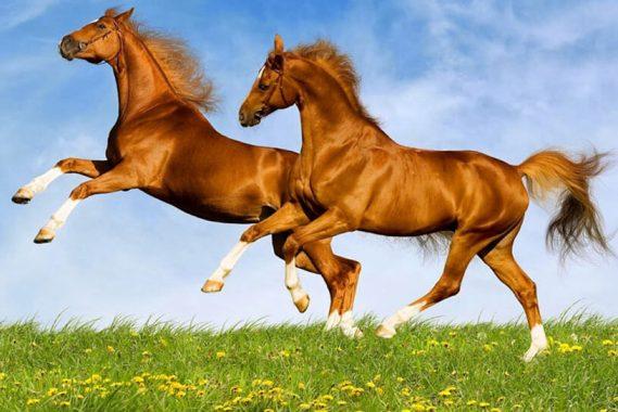 Nằm mơ thấy con ngựa đánh đề con gì chắc ăn nhất?