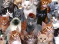Nằm mơ thấy mèo là điềm gì, đánh đề con gì chắc ăn nhất?