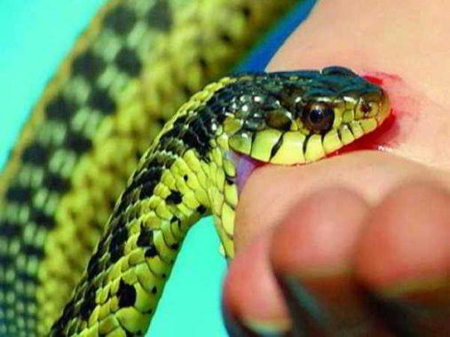 Mơ thấy rắn là điềm báo gì, đánh số nào chuẩn nhất?