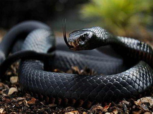 Nằm mơ thấy rắn đánh con gì?