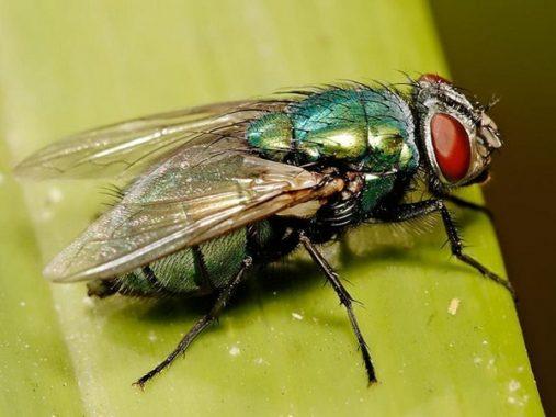 Ngủ mơ thấy ruồi đánh con gì? Mơ thấy ruồi có ý nghĩa gì