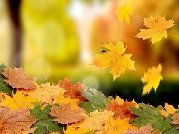 Mơ thấy lá rụng là điềm báo lành hay dữ?