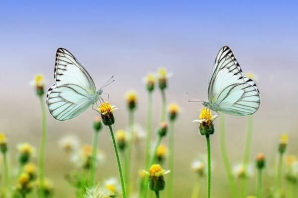 Nằm mơ thấy bướm bay vào nhà đánh con gì đánh số mấy